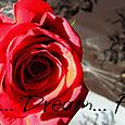 Rose_banner