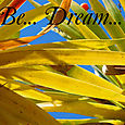 Dragon_tree_banner