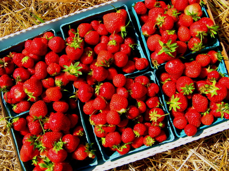 Strawberries_20lbs