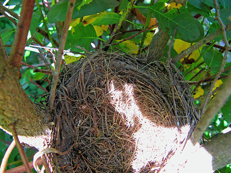 Fledgling empty nest