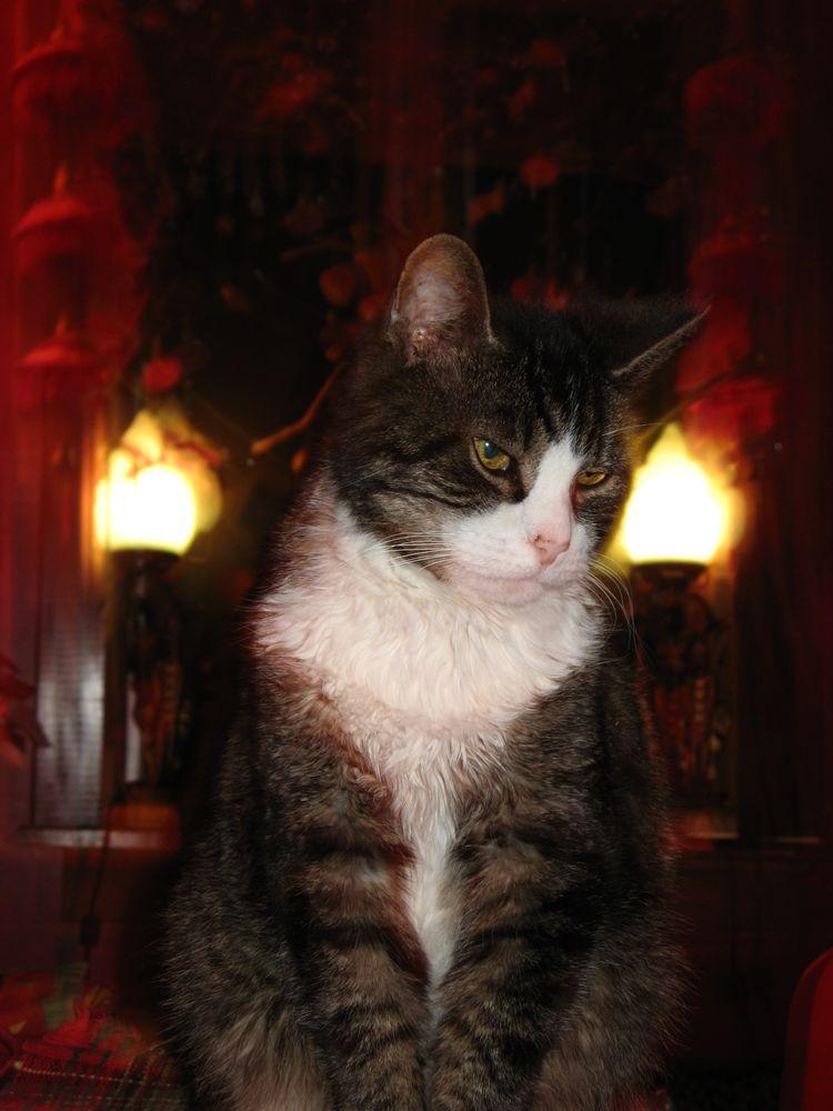 Dreaming of catnip