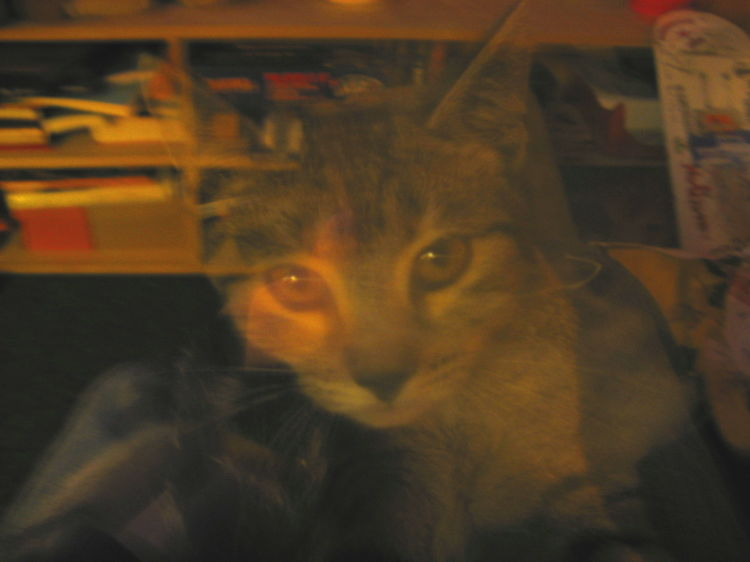 Kitty trans