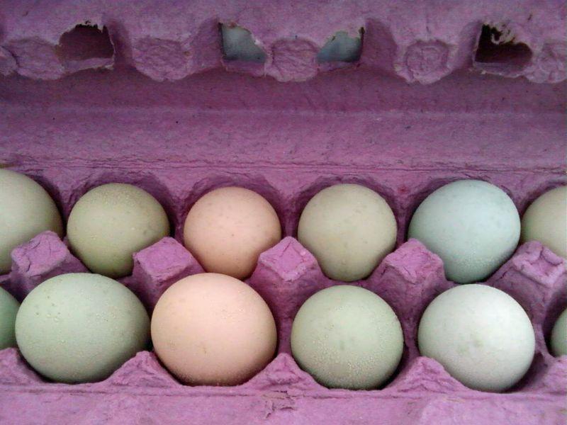 Blue eggs 2