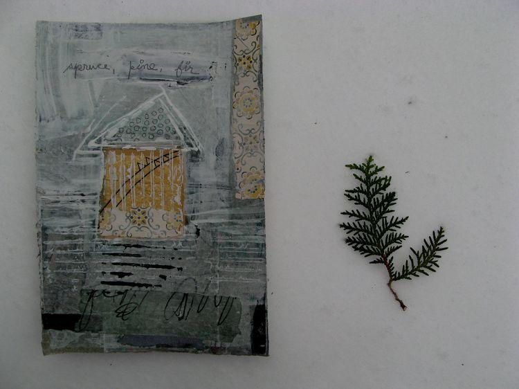 1 spruce pine fir. 2jpg
