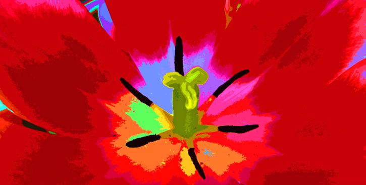 Bd_tulip_fresco