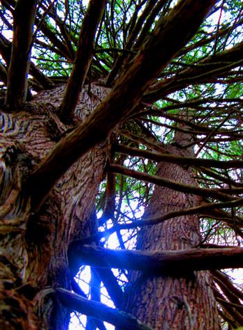 Sky_tree_crop_2