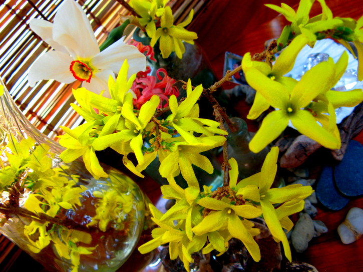 Forsythia_and_narcissus