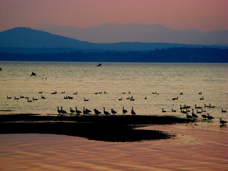 Geese_at_sunset_2