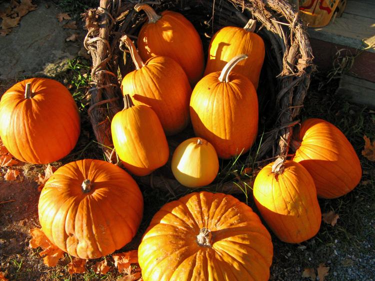 O_pumpkins