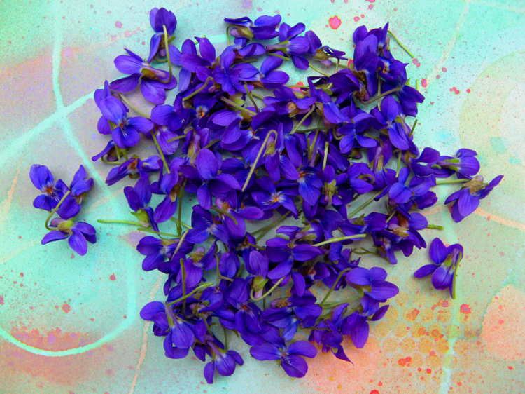 Fairy_violets_100_2