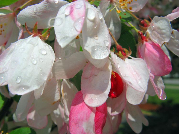 Pink_6
